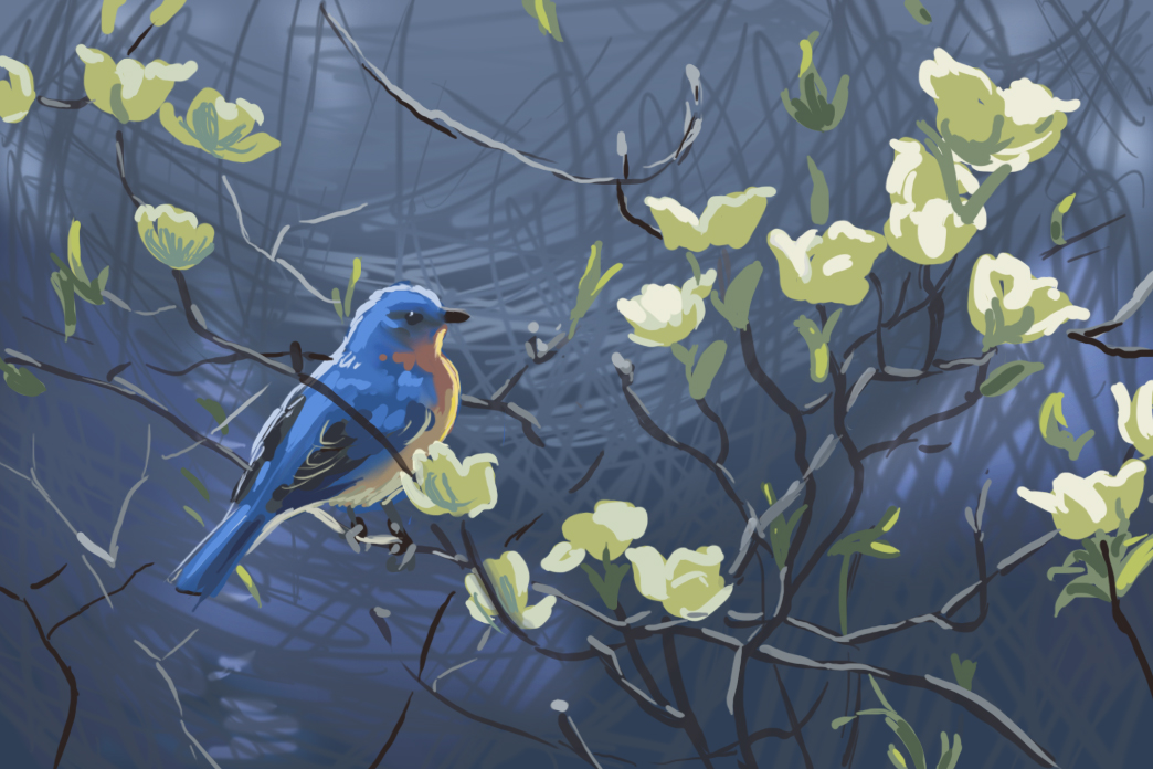 Bluebird and Blossoms Composition 03