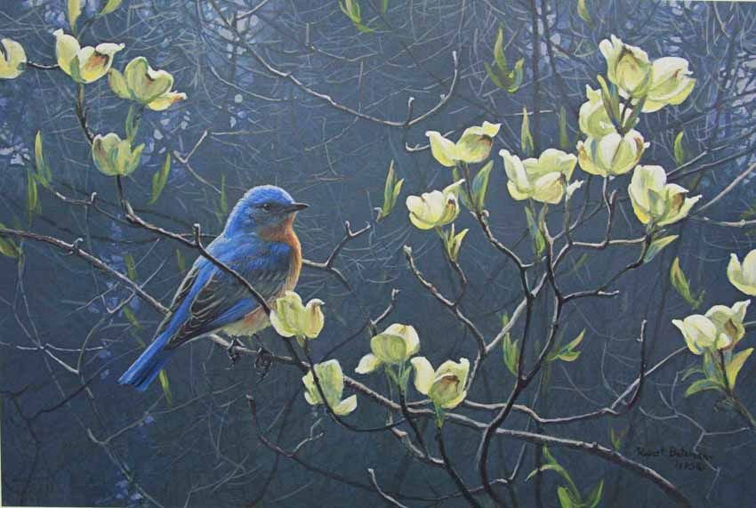 Blue Bird and Blossoms by Robert Bateman.