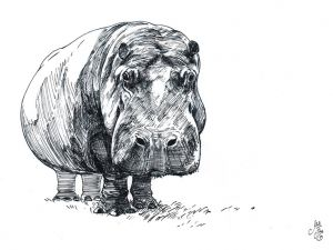 Hippo--Ink
