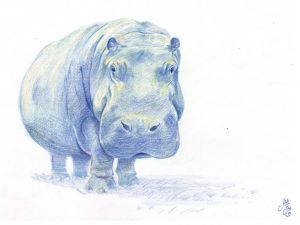 Hippo--Pencil Crayon